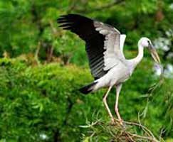 Thenmala Package Tour