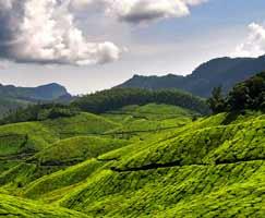 Thenmala Tourism Honeymoon
