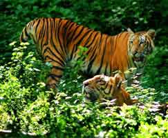 Thenmala Tour Package