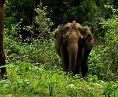 Honeymoon In Thenmala